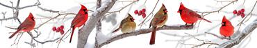 Скинали - Кардиналы на деревьях в зиму