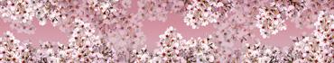 Скинали - Цветущие вишневые веточки на розовом фоне