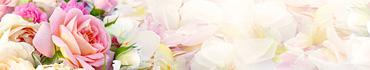 Скинали - Яркая роза на белых лепестках