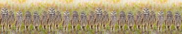 Скинали - Собрание роющих сов, панорама