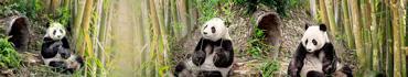 Скинали - Милые панды с веточками бамбука