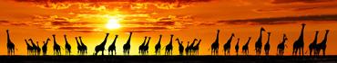 Скинали - Силуэты жирафов на фоне заката солнца