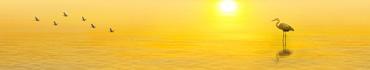 Скинали - Цапля в воде в лучах солнца