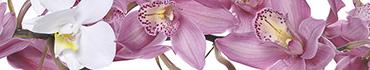 Скинали - Орхидеи