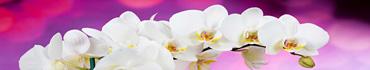 Скинали - Ветка белой орхидеи на ярком фоне