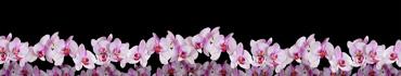 Скинали - Веточки орхидей на черном фоне