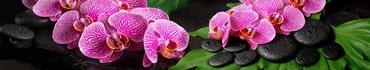 Скинали - Розовые орхидеи на дзен камушках с каплями воды