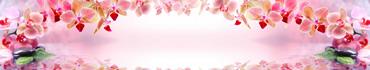 Скинали - Орхидеи на светлом розовом фоне