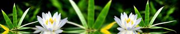 Скинали - Белый лотос на фоне листьев бамбука