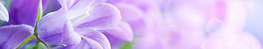 Скинали - Фиолетовая сирень