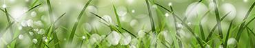 Скинали - Аниме - зеленая трава