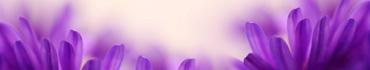 Скинали - Нежные фиолетовые лепестки