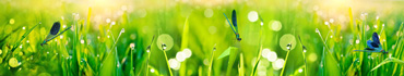 Скинали - Синие стрекозы в утренней траве