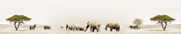 Скинали - Животные на равнине