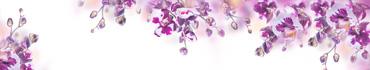 Скинали - Нежные пурпурные орхидеи на белом фоне