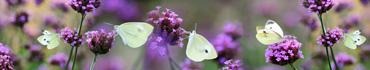 Скинали - Бабочки на полевых цветах