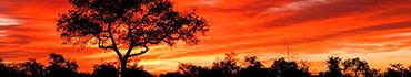 Скинали - Багровый закат в саванне