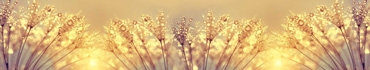 Скинали - Одуванчик в росе и солнечном свете