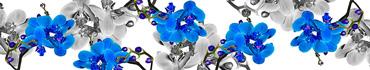 Скинали - Яркие синие и черно-белые орхидеи