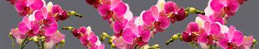 Скинали - Розовые орхидеи на сером фоне