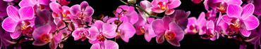 Скинали - Розовые орхидеи на черном фоне
