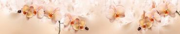 Скинали - Нежные орхидеи на бежевом фоне