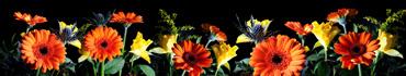 Скинали - Цветы на черном фоне