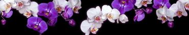 Скинали - Фиолетовые и белые орхидеи на черном фоне