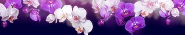 Скинали - Нежные орхидеи на темном фоне
