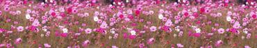 Скинали - Поле розовых цветов