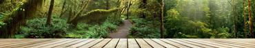 Скинали - Таинственный свет дремучего леса