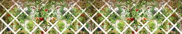 Скинали - Вьющиеся цветы и растения на винтажном деревянном заборе