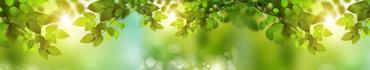Скинали - Нежные лучи солнца в листьях на деревьях