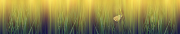 Скинали - Бабочка в абстрактной траве