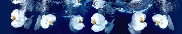 Скинали - Цветки белой орхидеи, упавшие в воду