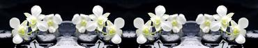 Скинали - Белые орхидеи на камнях