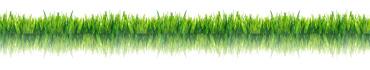 Скинали - Трава на белом фоне