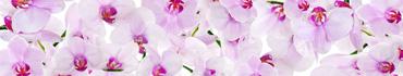 Скинали - Нежно-розовые орхидеи на белом фоне