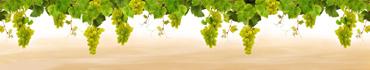 Скинали - Свисающие ветки винограда