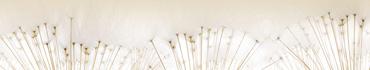 Скинали - Семена одуванчиков на светлом фоне