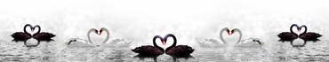 Скинали - Пары черных и белых лебедей