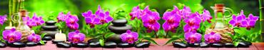 Скинали - Розовые орхидеи и спа камни на фоне сочной зелени