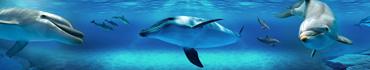 Скинали - Дельфины под водой