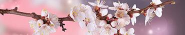 Скинали - И снова цветки вишни