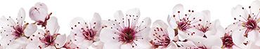 Скинали - Распускающиеся бутончики растений