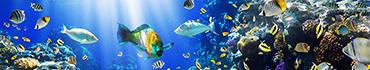 Скинали - Подводный мир, коралловые рифы