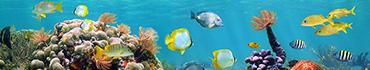 Скинали - Подводный мир