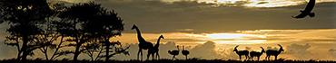 Скинали - Африканская саванна рано утром