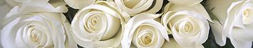 Скинали - Просто прекрасные белые розы