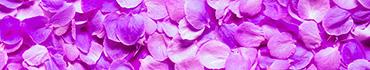 Скинали - Фиолетовые лепестки